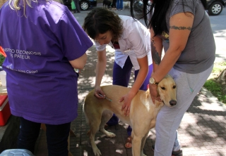 Vacunan perros y gatos
