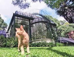 gato_en_botanico